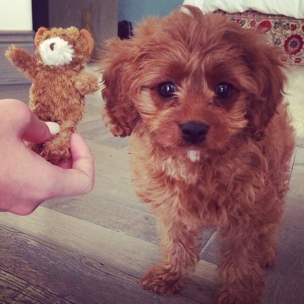 Katy Perry's adorable caramel-colored puppy!   Animals Zone