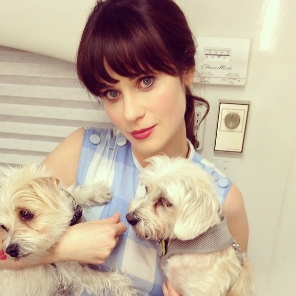 Zooey Deschanel with her puppies Zelda and Dot | Animals Zone