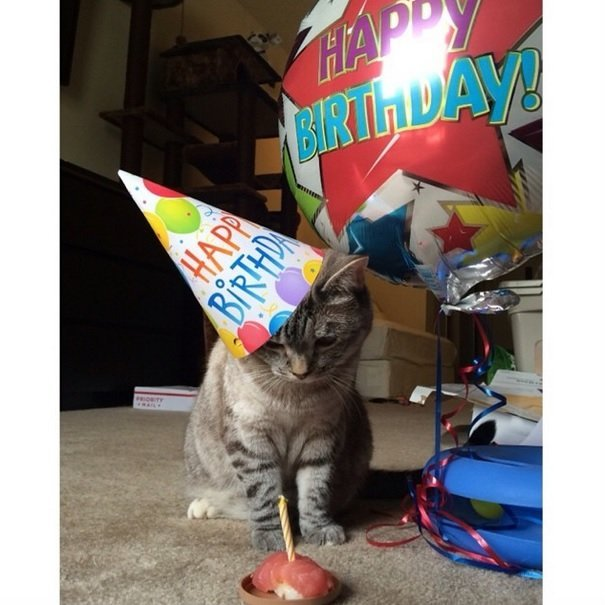 Nala's celebrating her 4th birthday with her sushi cake| Animals Zone
