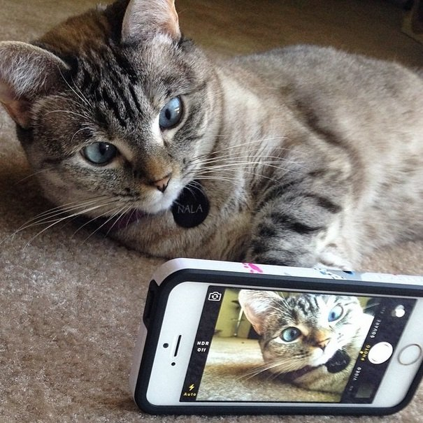 Nala The Most Famous Cat On Instagram Animals Zone