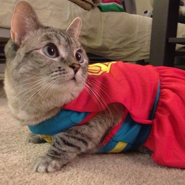 Supercat | Animals Zone