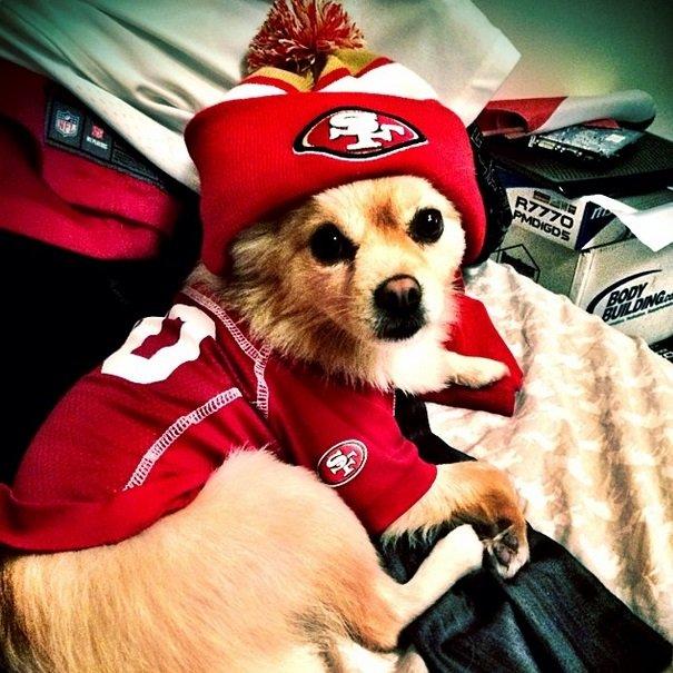 49ers fan | Animals Zone