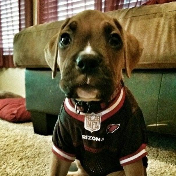 Cardinals fan | Animals Zone