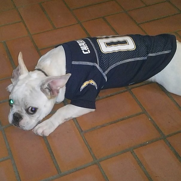 Chargers fan | Animals Zone