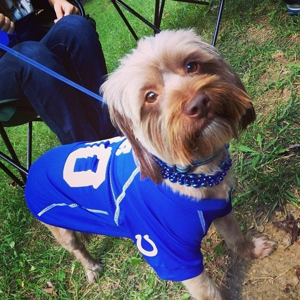 Colts fan | Animals Zone