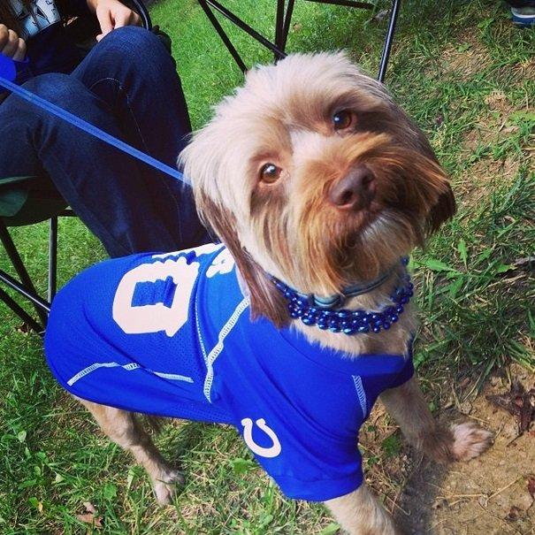 Colts fan | Animals Zone