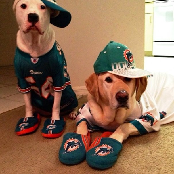 Dolphins fans | Animals Zone