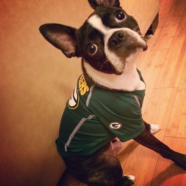 Packers fan | Animals Zone