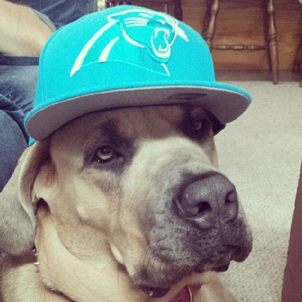 Panthers fan | Animals Zone