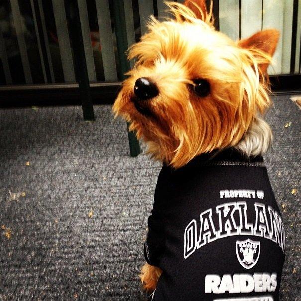 Raiders fan | Animals Zone