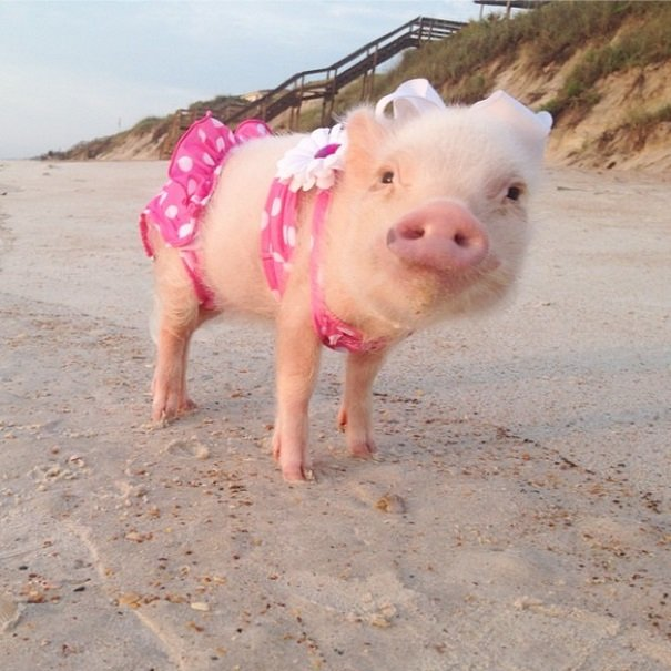 Prissy is rocking her cute pink bikiny | Animals Zone