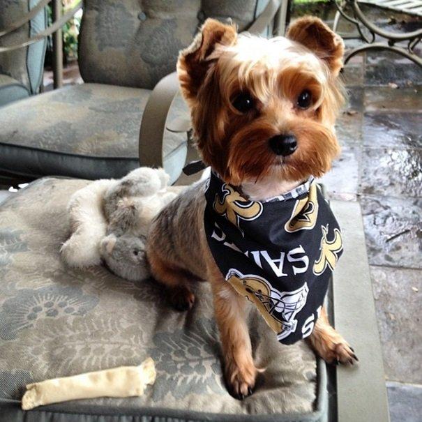 Saints fan | Animals Zone