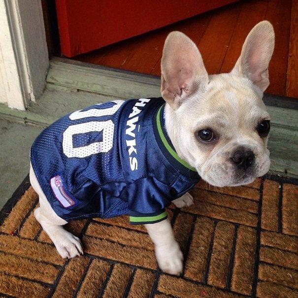 Seahawks fan | Animals Zone