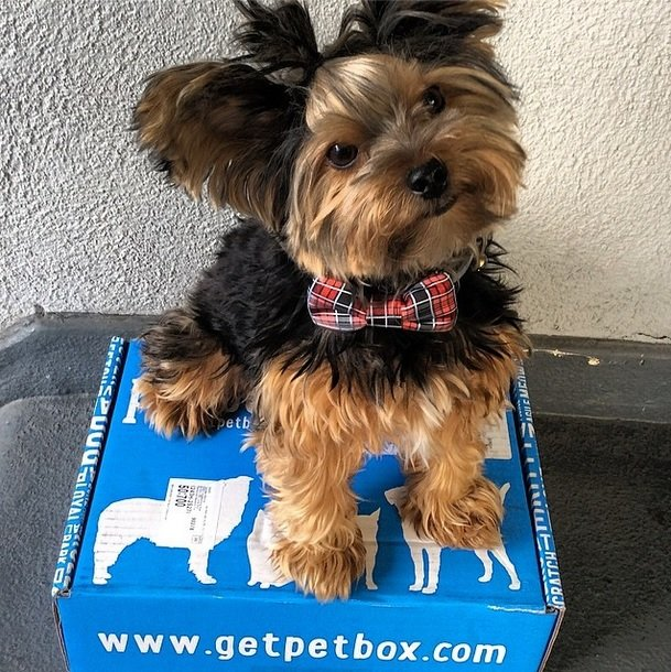 Adorable yorkie and his box filled with goodies | Animals Zone #win one for your pet!