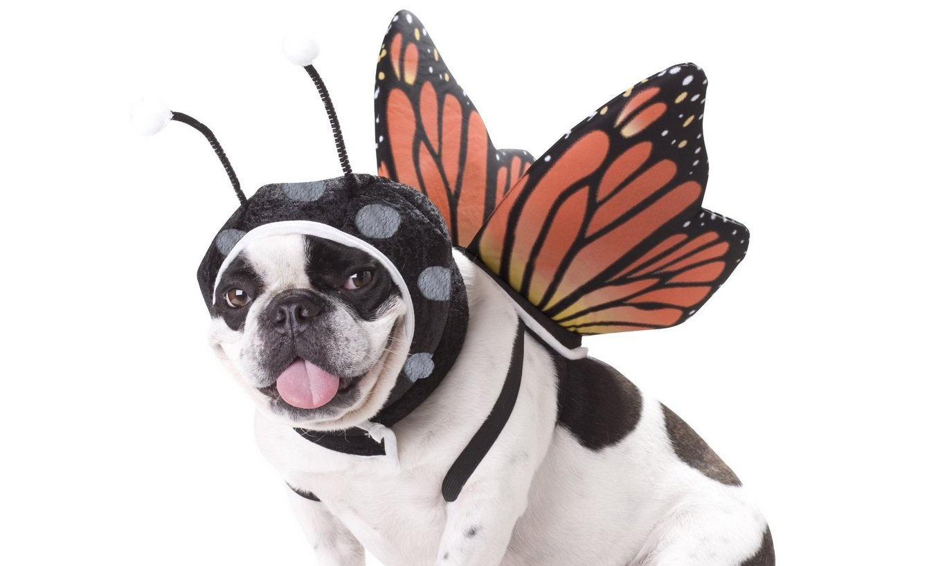 Butterfly Dog Costume | Animals Zone