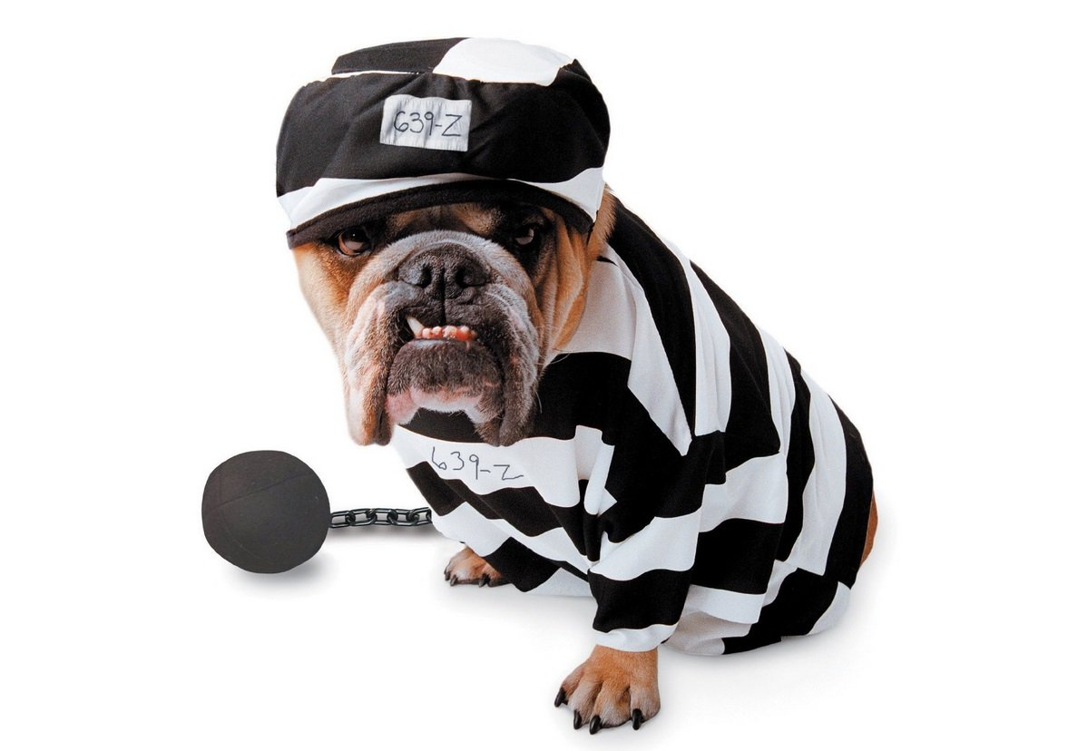 Jail Dog Costume | Animals Zone