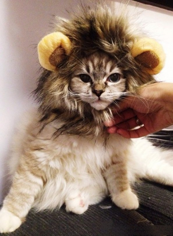Lion Costume | Animals Zone