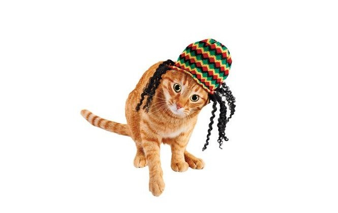 Reggae Rocker Cat Costume | Animals Zone