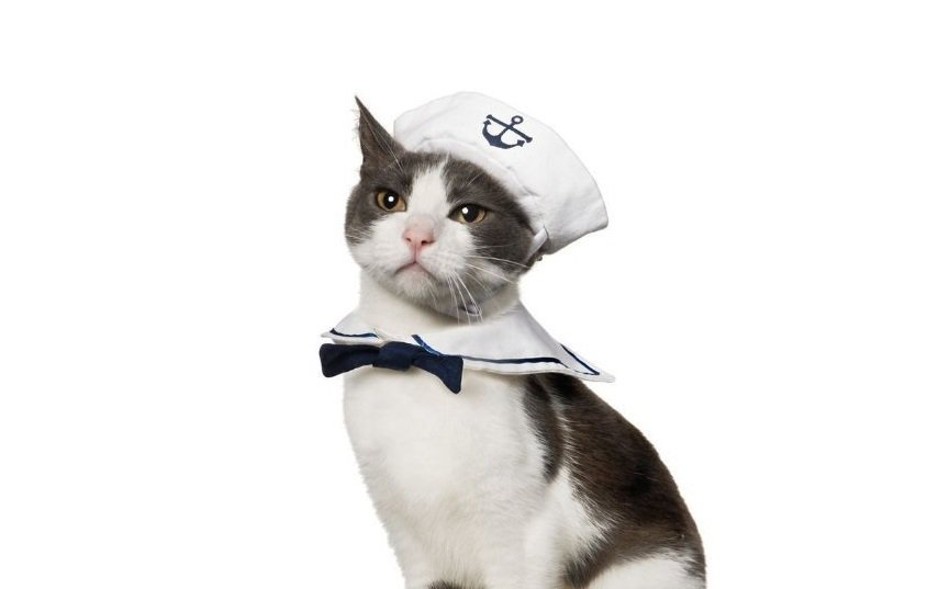 Sailor Halloween Costume | Animals Zone