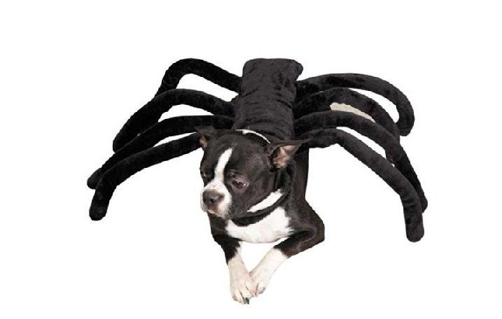 Spider Costume | Animals Zone
