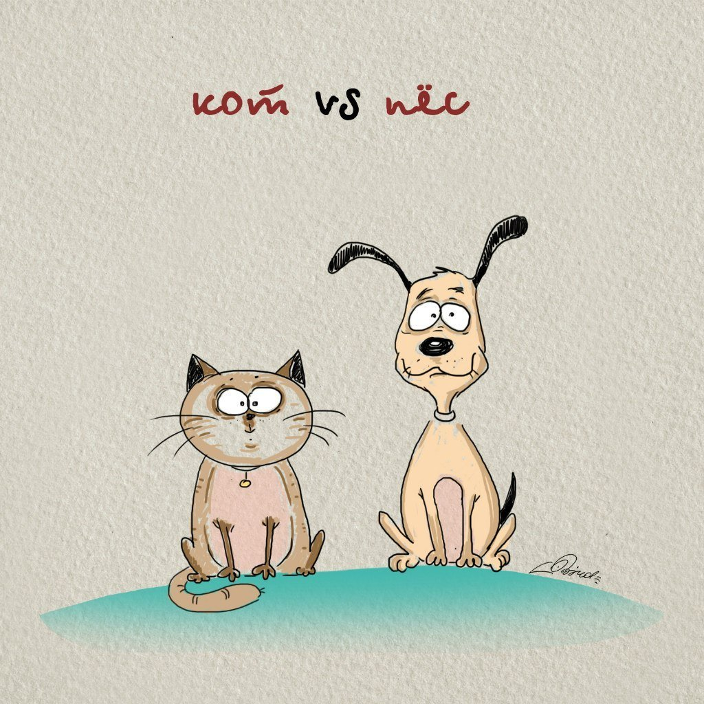 Cats Vs. Dogs  | Animals Zone