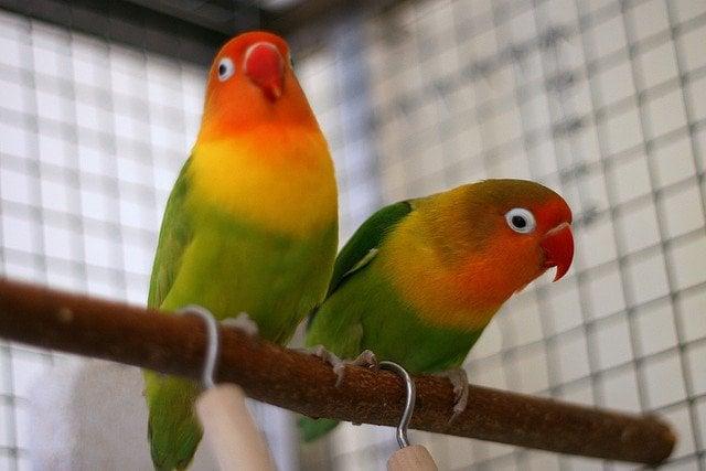 Adorable birds | Animals Zone