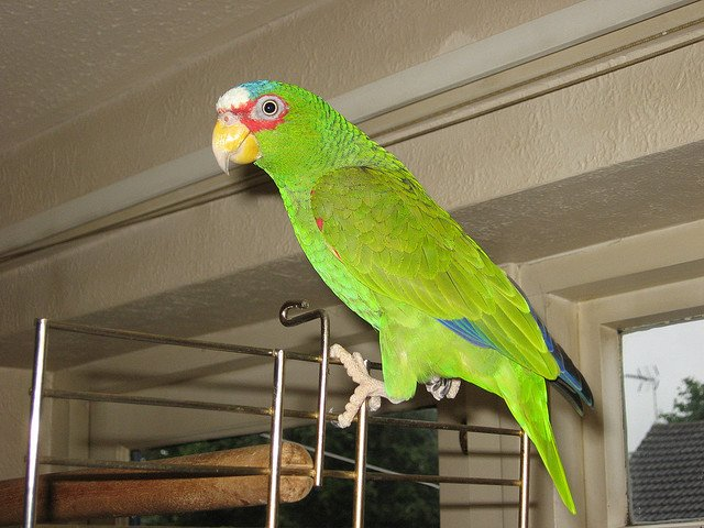 Charlie parrot | Animals Zone
