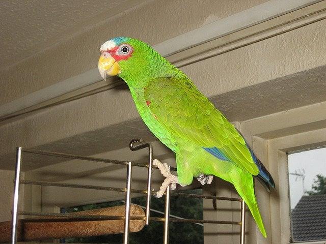 Charlie parrot | Animals Zone
