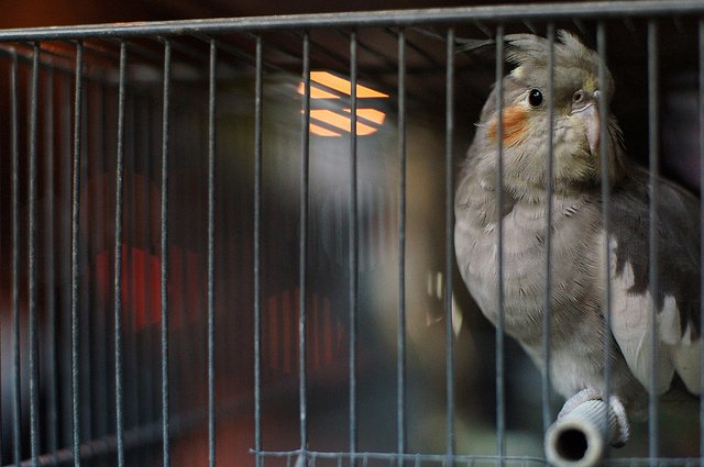 Birdy | Animals Zone