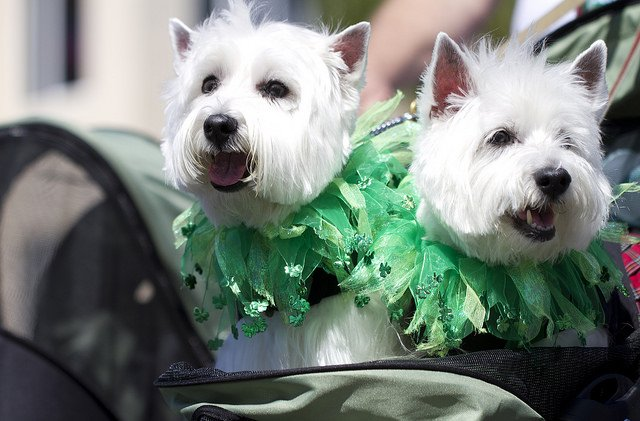 Cuties in Green | Animals Zone
