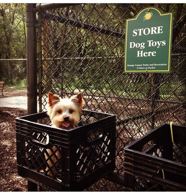 Fun at the dog park! | Animals Zone