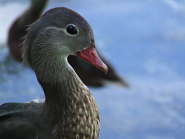 Beauty Of Nature: Amazing Bird Pictures | Animals Zone