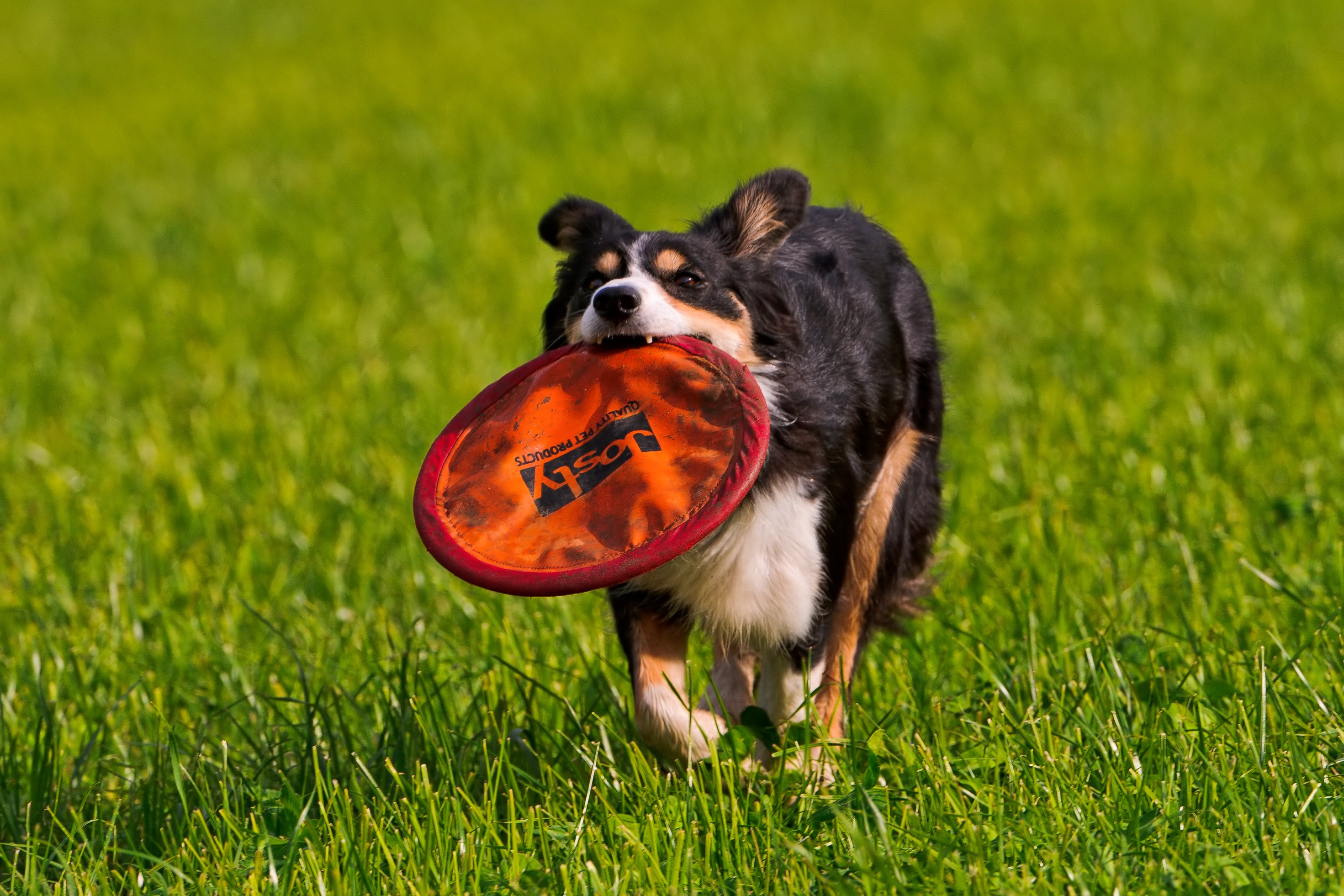 Frisbee Toss | Animals Zone