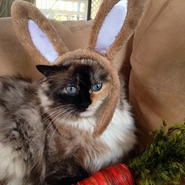 Easter cat! | Animals Zone