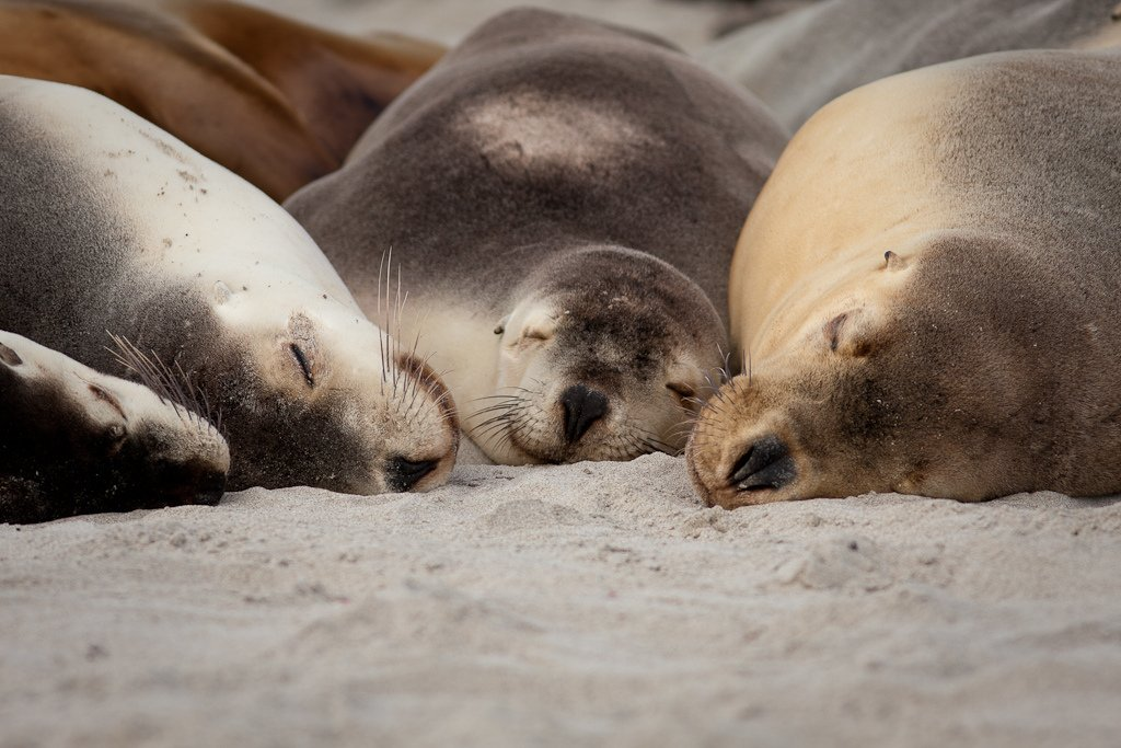 Sleeping beauties | Animals Zone