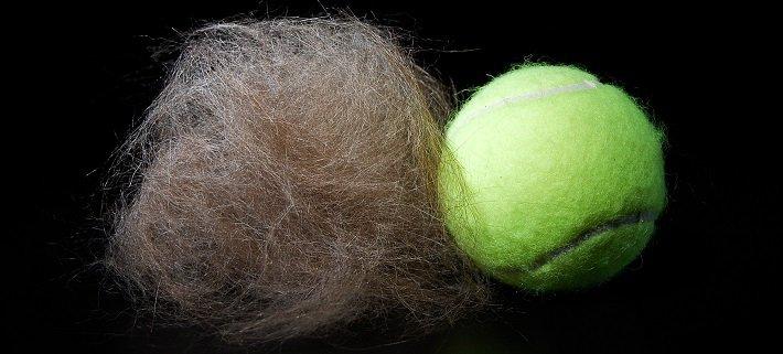 Pet hair fur ball | Animals Zone