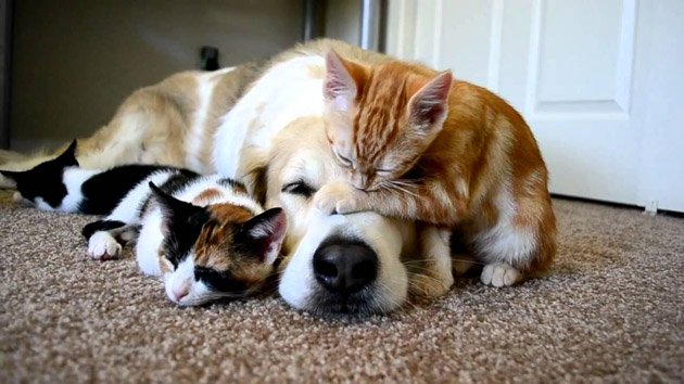 Adorable dog sleeping with cats | Animals Zone