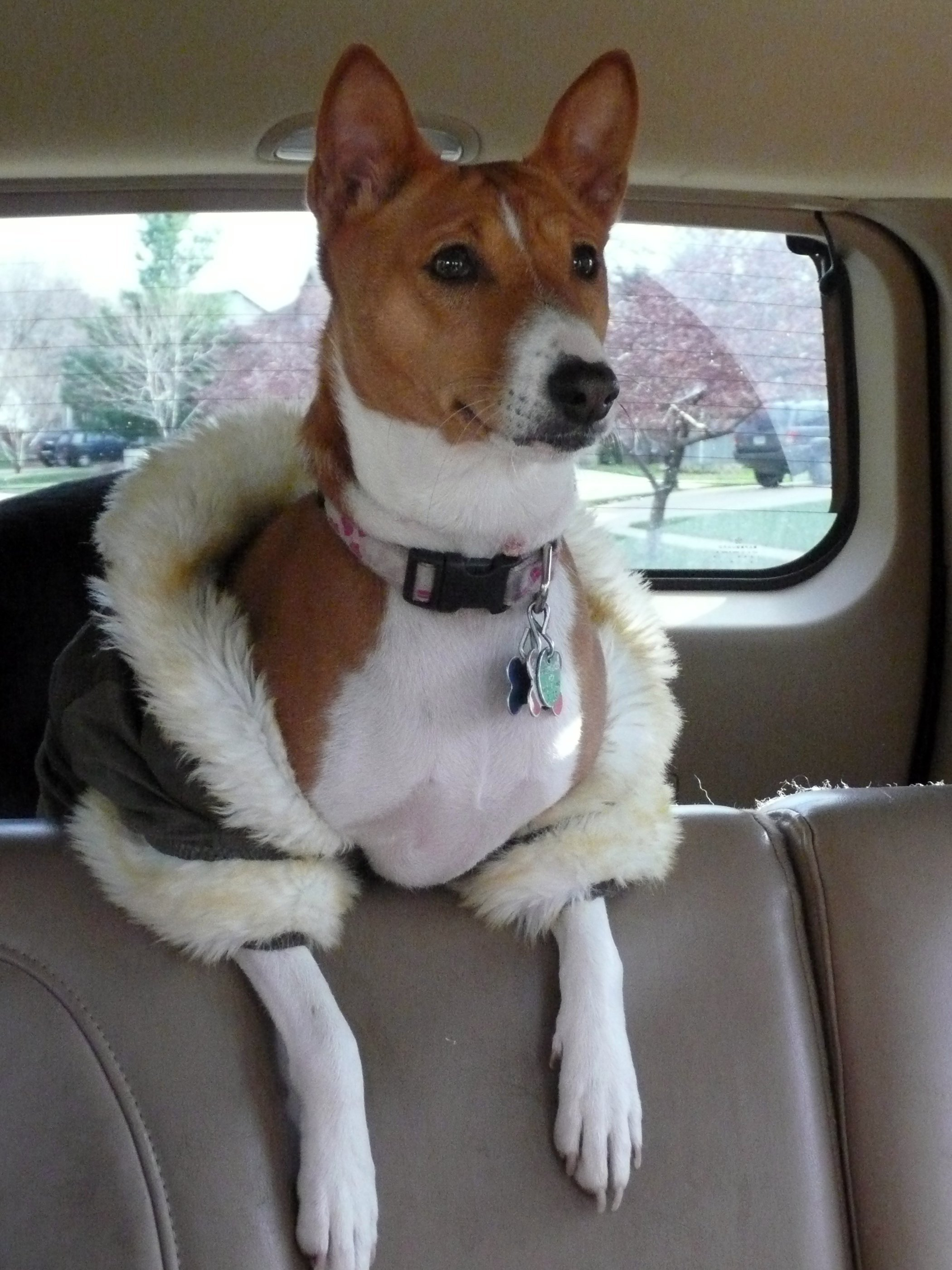On the way to the dog park. All she needs is a tiara | Animals Zone