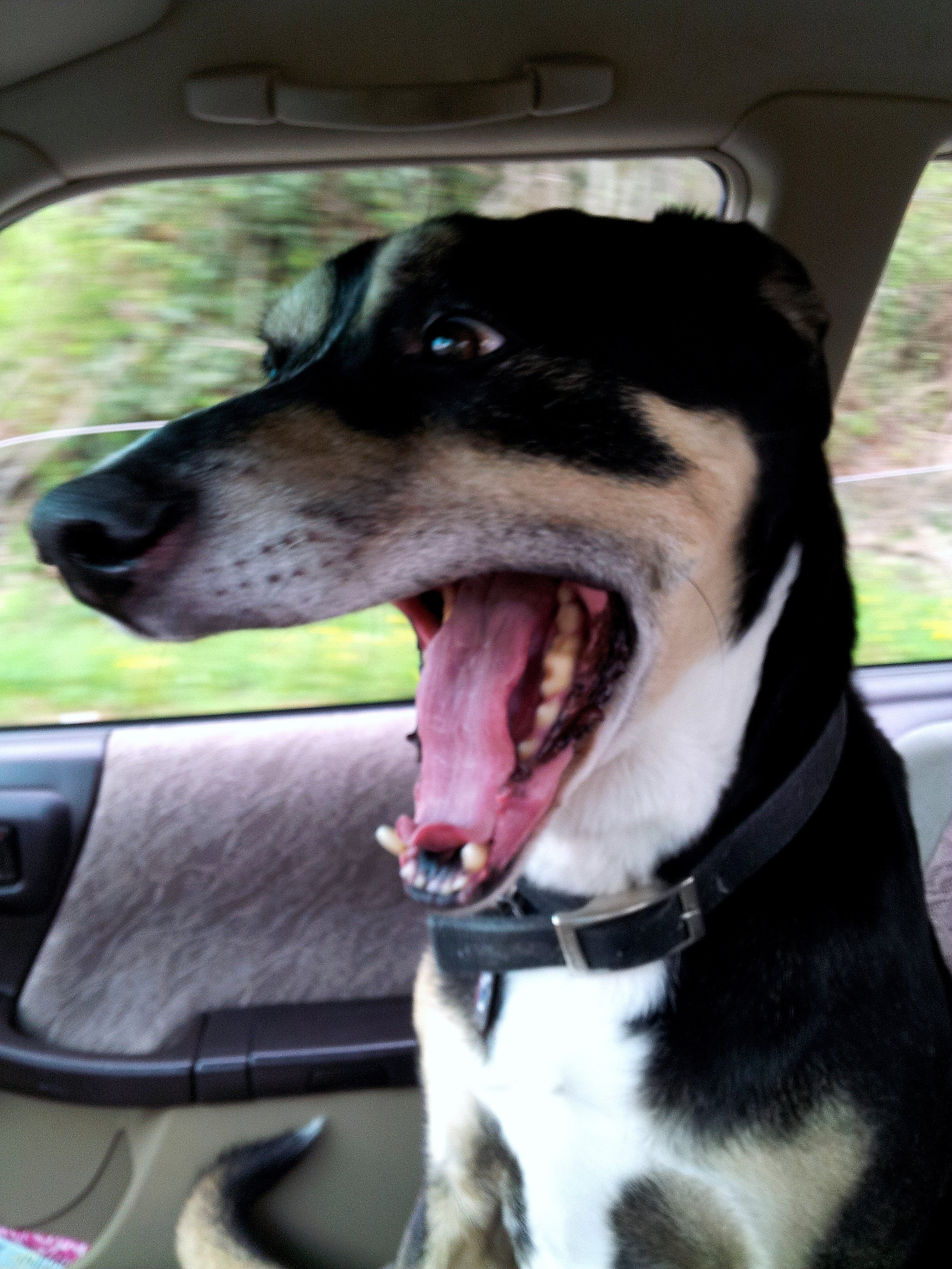14 Cute Dogs Who Really Enjoy Riding In The Car14 Cute