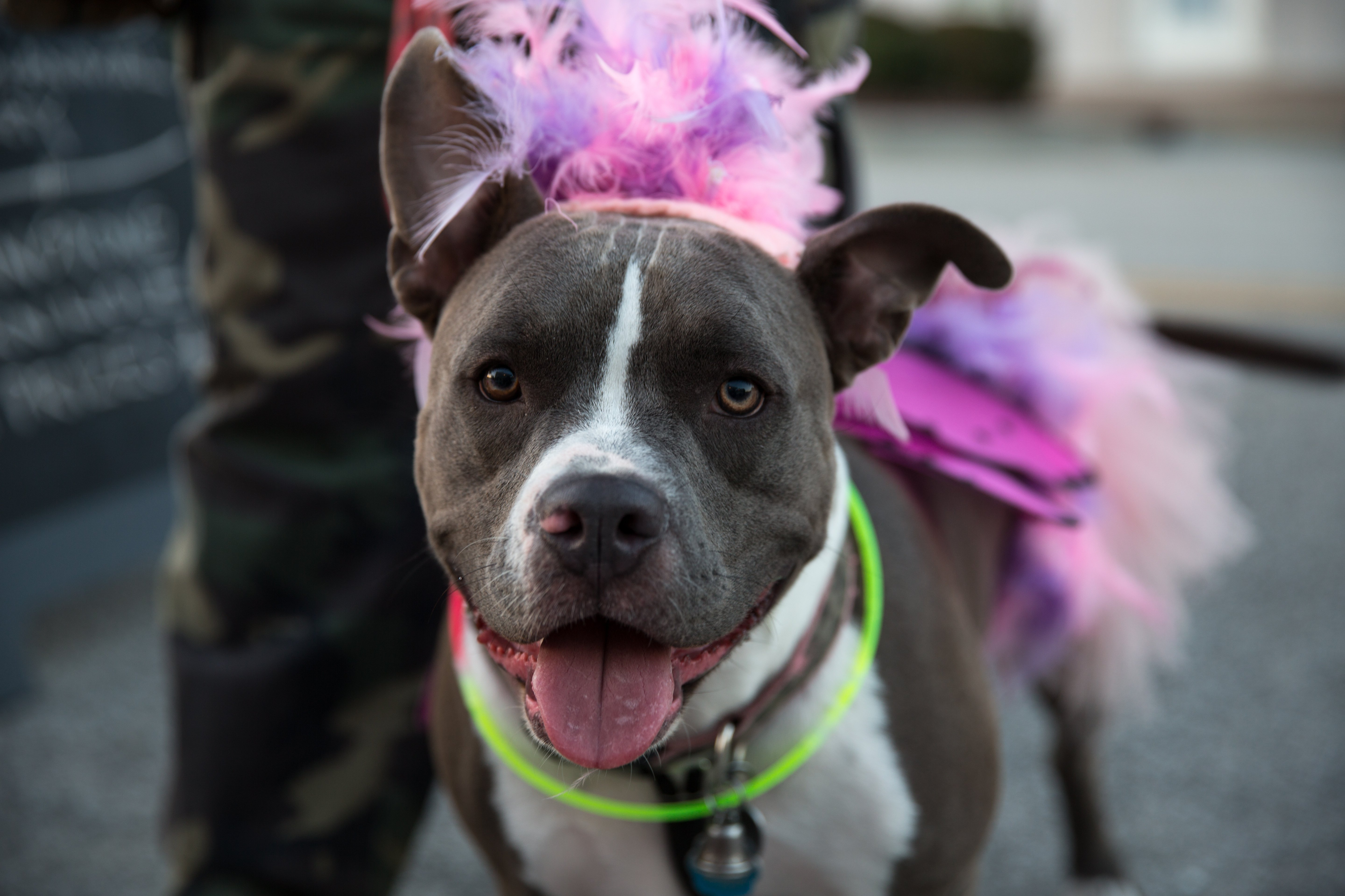 10 Adorable Pups Ready to Trick-or-Treat   Animals Zone