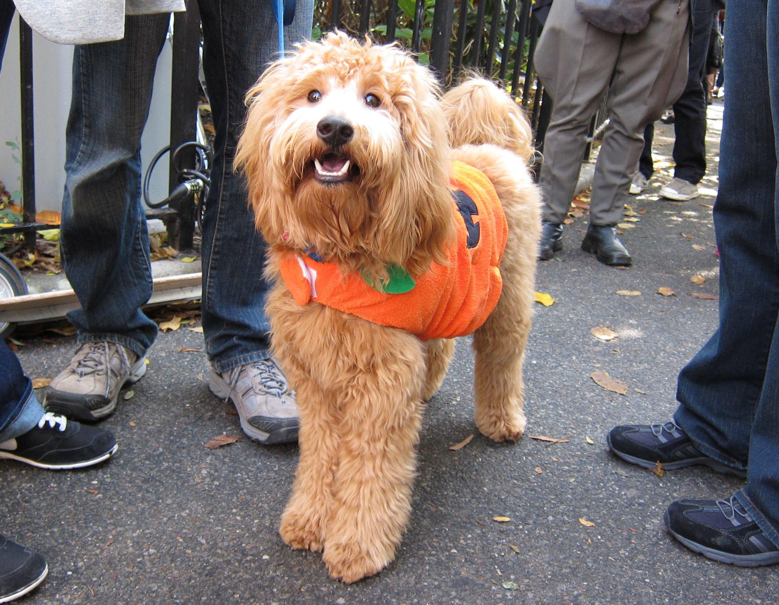 What a cute fluffy pumpkin!   Animals Zone