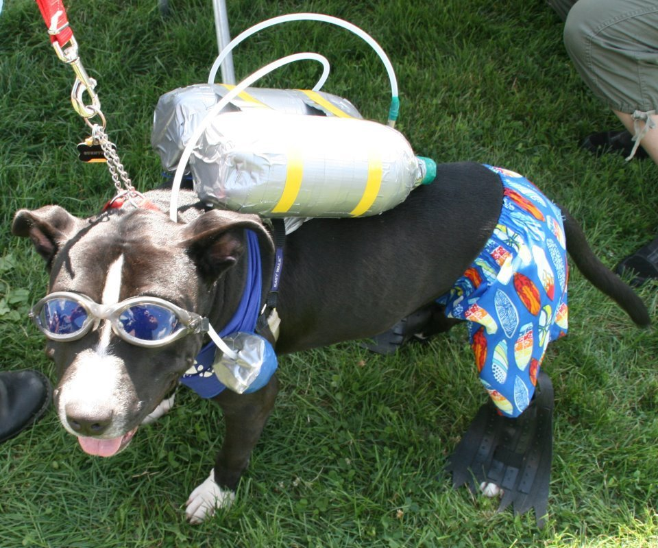 Scuba Diver Dog | Animals Zone