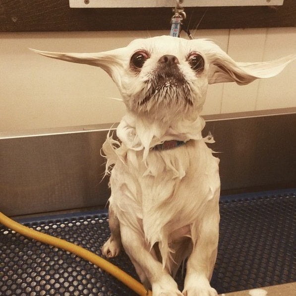 Cute and Hilarious Photos Capture Dog Emotions at Bath Time | Animals Zone