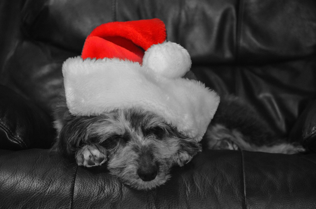 Cute little Santa ? | Animals Zone