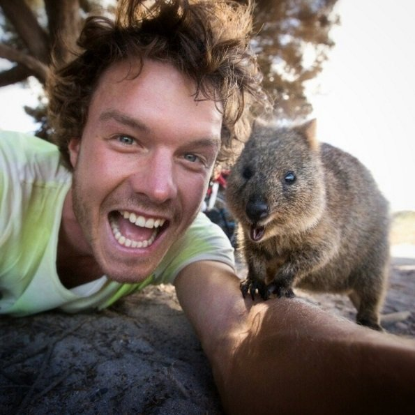 Hilarious Wildlife Selfies | Animals Zone