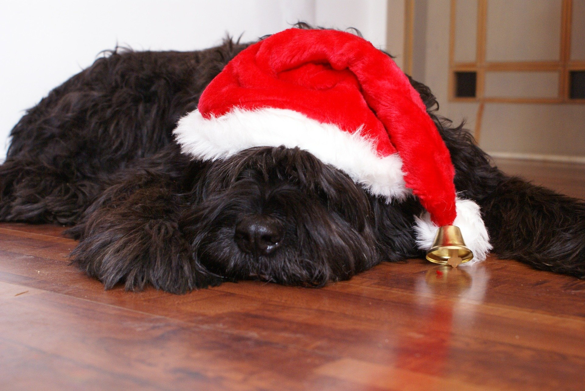 Christmas Pets 2015 | Animals Zone