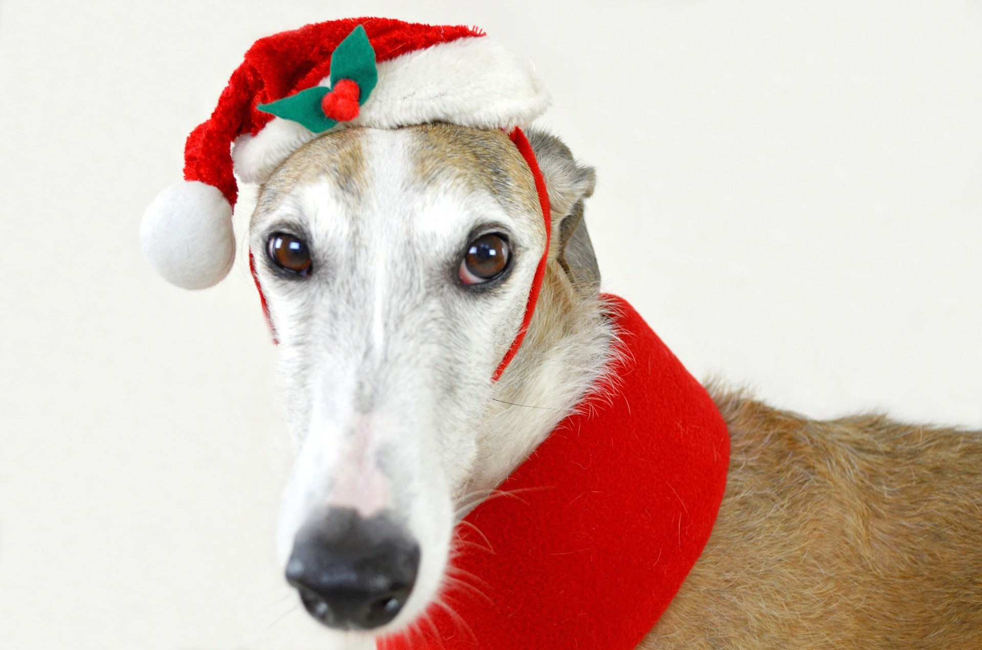 Santa's Little Helper | Animals Zone