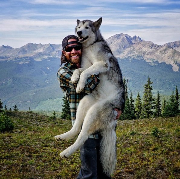 Incredible Outdoor Adventures of the Wolfdog and his Human. Click to read the full story | Animals Zone