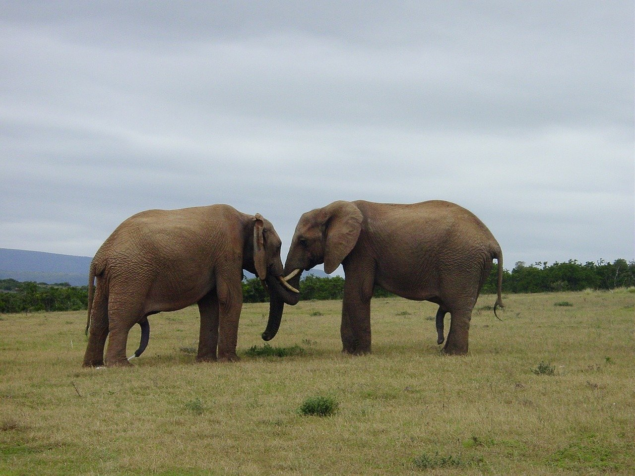 Elephants. Click to see more of Adorable Animal Pictures for Valentine's Day | Animals Zone