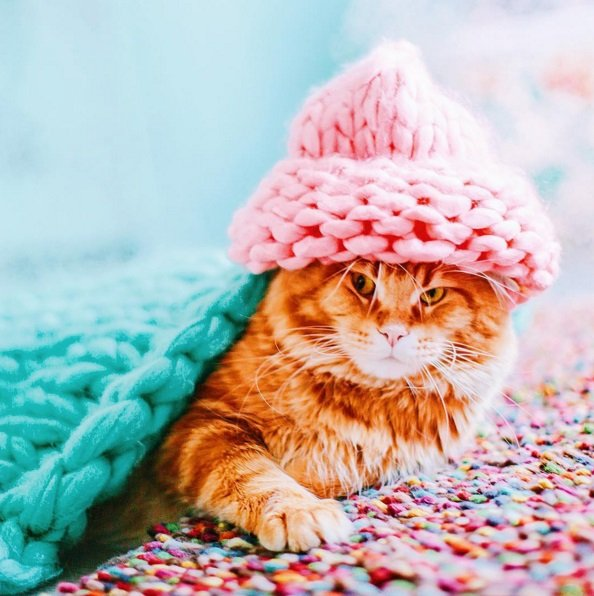 Cutlet, An Adorable Red Cat from Russia | Animals Zone
